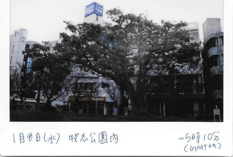 8 Jan Makishi Park 2