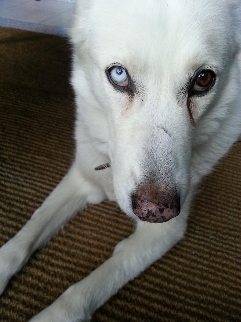 Monica's dog Jassa