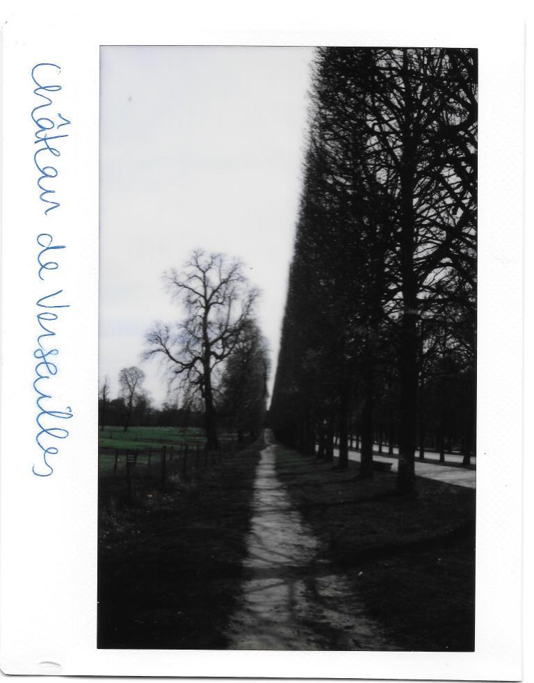 Paris Versailles Trees