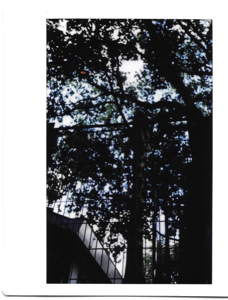 Zoo tree