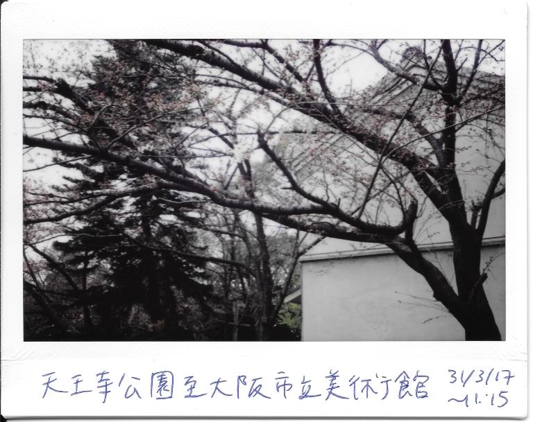 Cherry blossom outside Art museum