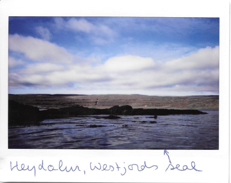 Heydalur Kayaking Seal