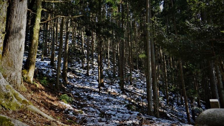 Kibune to Kurama trees edited vig